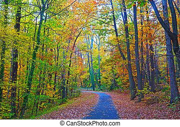 US National Arboretum in the Fall, Washington DC. Road framed by colorful autumn leaves in the dense thicket.