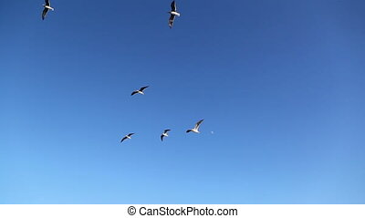 group of seagull flying in the blue sky