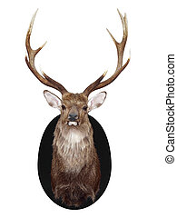 Nine Point Mounted Stags Head isolated with clipping path...