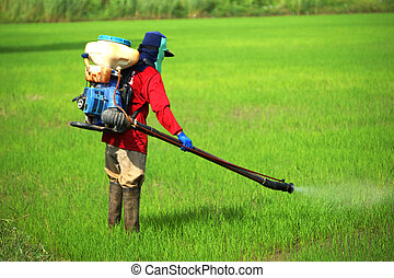 Farmers were spraying herbicides in rice field.
