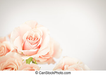 Peach rose cluster with vignette - Soft coral pink rose...