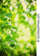 fresh green leaves of birch tree instagram stile