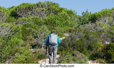 A Man with Backpack Walking on Forest Trail