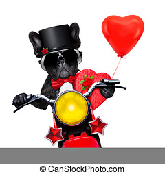 valentines groom dog - valentines french bulldog dog ,...