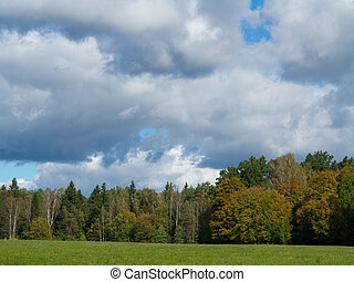 Forest meadow with cloudy sky