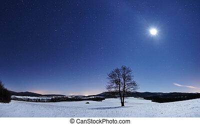 Tree panorama at winter night
