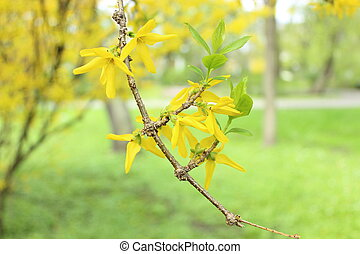 Twig tree with blooming flowers in spring