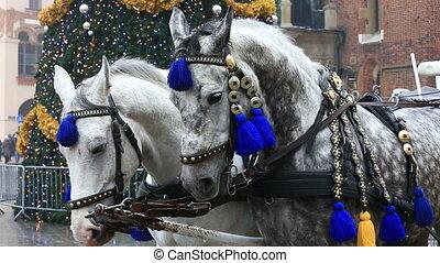 Horses on the Market square in Krakow