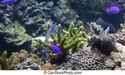 Tropical small fishes at a coral reef
