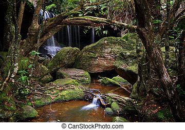 The lush Grotto at Fitzory Falls Australia - The Grotto...