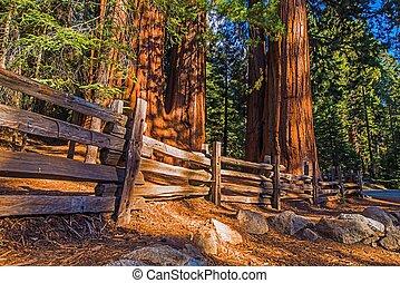 巨人, 地方, 紅杉