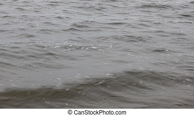 Surface of lake with waves - Surface of gray lake with waves...