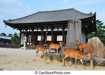 Deers flocking in front of temple - Deers, seen as holy and...
