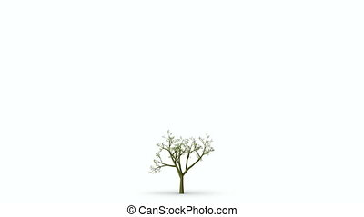 Growth of large green tree. Black a