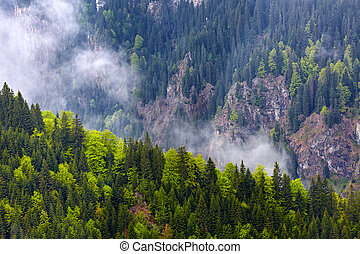 Pine forests on mountains - Pine forests on the mountains in...