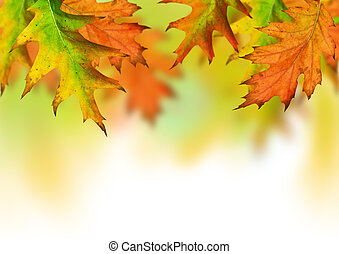 Autumn Season - Seasonal autumn leaves with room for copy...