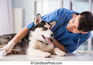vétérinaire,