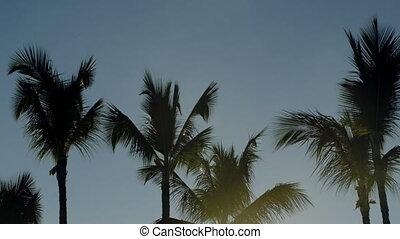 Bright evening sun shining among the palms - Tilt shot of...