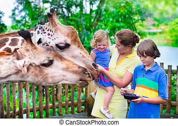 Giraffe, Fütterung,  zoo, Kinder