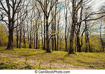 Spring time - Spring landscape
