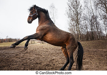 Running horse on the dirty field at spring time