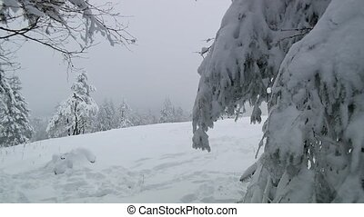 Winter Wonderland With Snow and fog - Video footage of a...