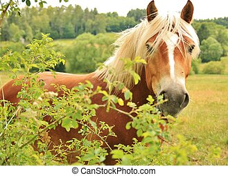 horse is looking through the leaves - horse is looking...