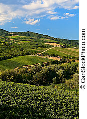 Hill vineyards at Chianti, Tuscany