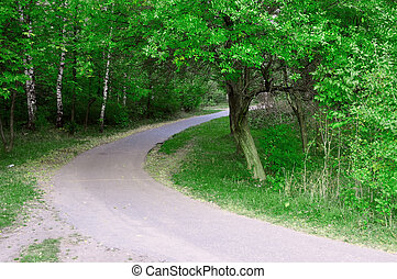 road in summer green forest