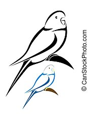 Parakeet - Vector illustration : Parakeet on a white...