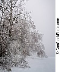 Trees in a fog sagging under the weight of winter snow and a gho