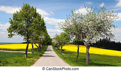 road, alley of apple tree, field of rapeseed - springtime...