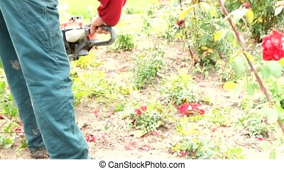 A man trimming down  rose bush with trimmer machine