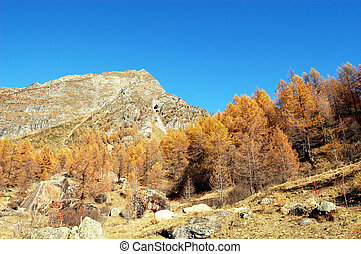 autumn larches on mountain - autumnal panoramic view of...