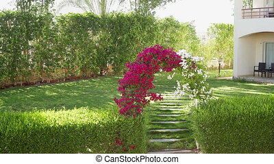 Arch of flowers bougainvillaea on a green glade