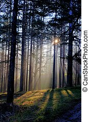 Morning sun beam in forest, mystic forest scene