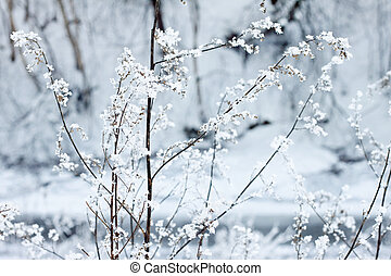 Ice covered plant - Ice covered flower in a forest