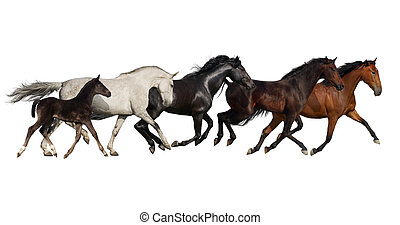 Group of horse run - Horses run gallop and trot isolated on...