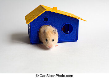 Small homeowner - Hamster in the house