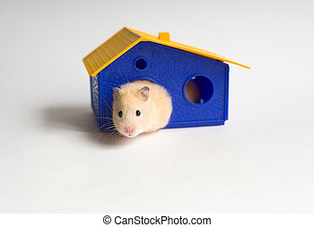 Small homeowner - Hamster in the toy house