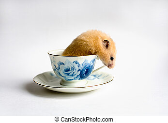 Escape from  the teacup
