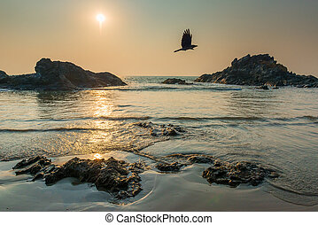 sun over the sea and the flying crow