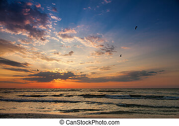 Beautiful sunrise on the beach with seagulls