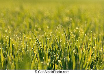 chiudere, su, di, fresco, spesso, erba, con, acqua, gocce,...