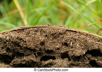 anthill with grass in background