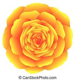 Rose Yellow Orange - Orange marigold, carnation or rose on...
