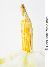 Fresh raw corncob on the white paper background