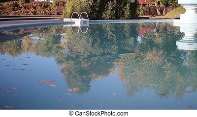 autumn leaves in the pool