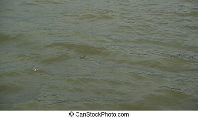 Waves at the Danube River Water Surface on a windy winter...