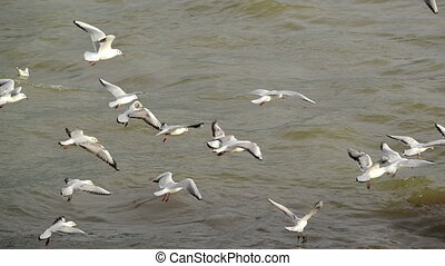 Flock of Seagulls at the river - Flock of Seagulls at the...